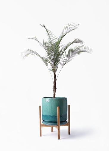 観葉植物 ヒメココス 8号 ビトロ エンデガ ターコイズ ウッドポットスタンド付き