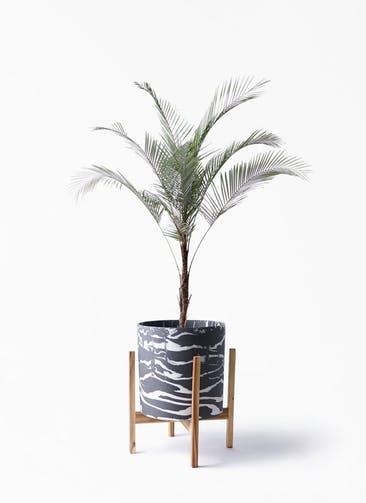観葉植物 ヒメココス 8号 ホルスト シリンダー マーブル ウッドポットスタンド付き