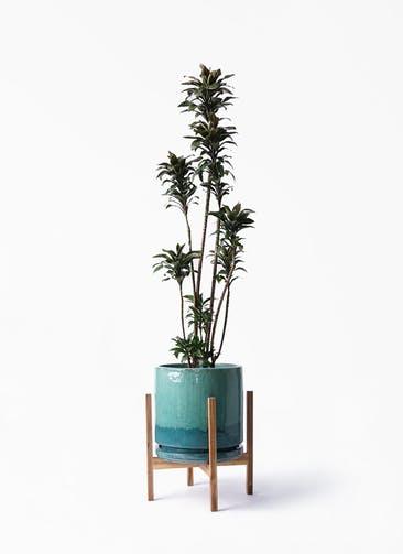 観葉植物 ドラセナ パープルコンパクタ 8号 ビトロ エンデガ ターコイズ ウッドポットスタンド付き