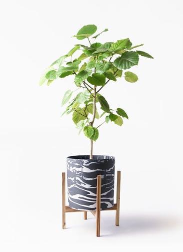 観葉植物 フィカス ウンベラータ 8号 ノーマル ホルスト シリンダー マーブル ウッドポットスタンド付き
