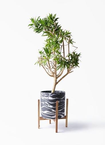 観葉植物 ドラセナ ソング オブ ジャマイカ 8号 ホルスト シリンダー マーブル ウッドポットスタンド付き