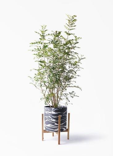 観葉植物 シマトネリコ 8号 ホルスト シリンダー マーブル ウッドポットスタンド付き