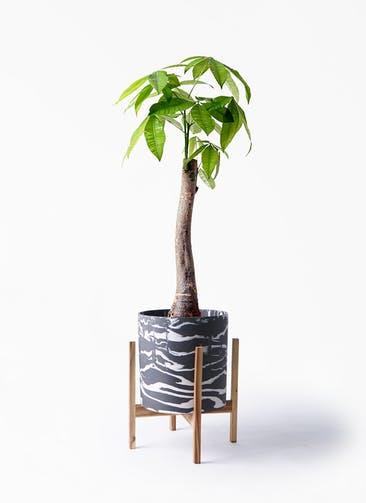 観葉植物 パキラ 8号 朴 ホルスト シリンダー マーブル ウッドポットスタンド付き