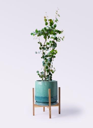 観葉植物 ユーカリ 8号 ポリアンセモス ビトロ エンデガ ターコイズ ウッドポットスタンド付き