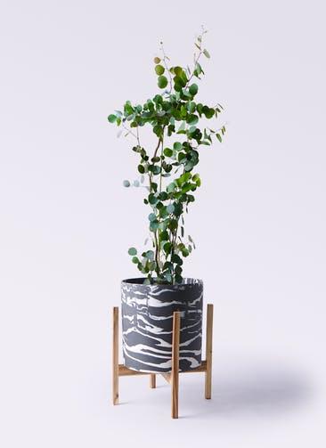 観葉植物 ユーカリ 8号 ポリアンセモス ホルスト シリンダー マーブル ウッドポットスタンド付き