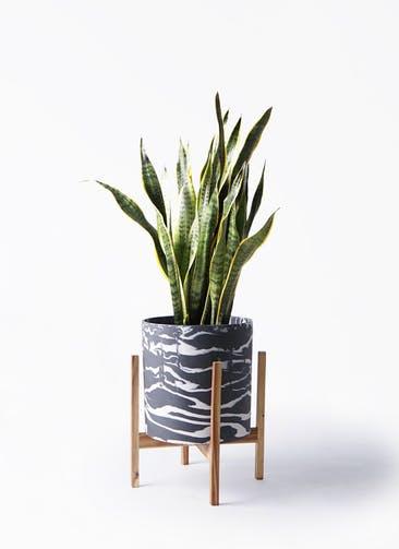 観葉植物 サンスベリア 8号 トラノオ ホルスト シリンダー マーブル ウッドポットスタンド付き