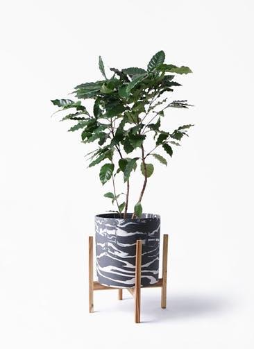 観葉植物 コーヒーの木 8号 ホルスト シリンダー マーブル ウッドポットスタンド付き