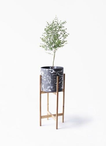 観葉植物 ユーカリ 6号 グニー ホルスト シリンダー マーブル ウッドポットスタンド付き