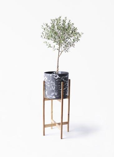 観葉植物 オリーブの木 6号 創樹 ホルスト シリンダー マーブル ウッドポットスタンド付き