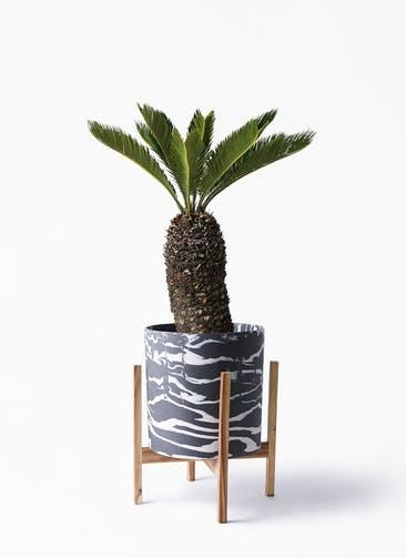 観葉植物 ソテツ 8号 ホルスト シリンダー マーブル ウッドポットスタンド付き