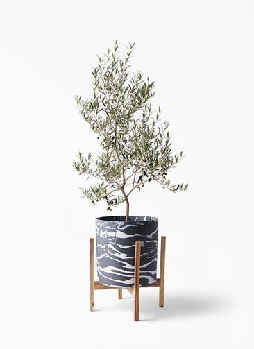観葉植物 オリーブの木 8号 アルベキーナ ホルスト シリンダー マーブル ウッドポットスタンド付き