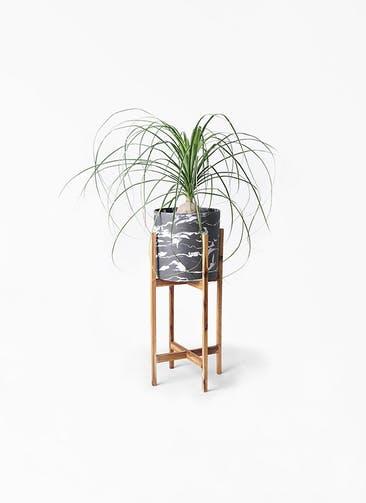 観葉植物 トックリラン 6号 ホルスト シリンダー マーブル ウッドポットスタンド付き