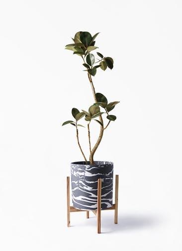 観葉植物 フィカス バーガンディ 8号 曲り ホルスト シリンダー マーブル ウッドポットスタンド付き