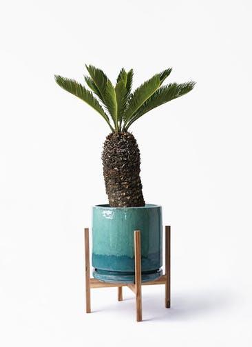 観葉植物 ソテツ 8号 ビトロ エンデガ ターコイズ ウッドポットスタンド付き