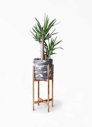 観葉植物 ユッカ 6号 ノーマル ホルスト シリンダー マーブル ウッドポットスタンド付き