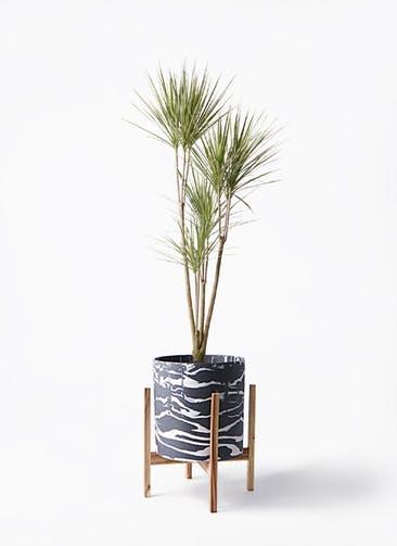 観葉植物 コンシンネ ホワイポリー 8号 ストレート ホルスト シリンダー マーブル ウッドポットスタンド付き