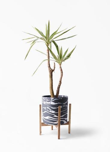 観葉植物 ユッカ 8号 斑入り ホルスト シリンダー マーブル ウッドポットスタンド付き