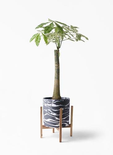 観葉植物 パキラ 8号 朴 斑入り ホルスト シリンダー マーブル ウッドポットスタンド付き