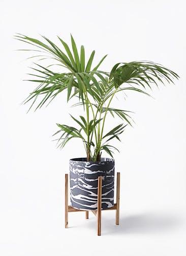 観葉植物 ケンチャヤシ 8号 ホルスト シリンダー マーブル ウッドポットスタンド付き