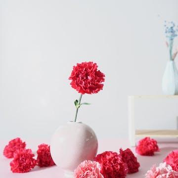 カーネーション 花束