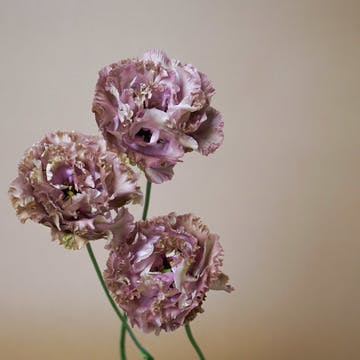 ブラウンの花束