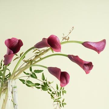 カラー 花束