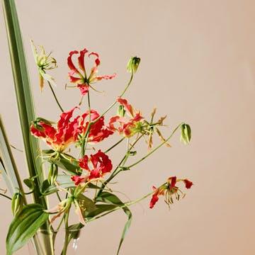 グロリオサ 花束