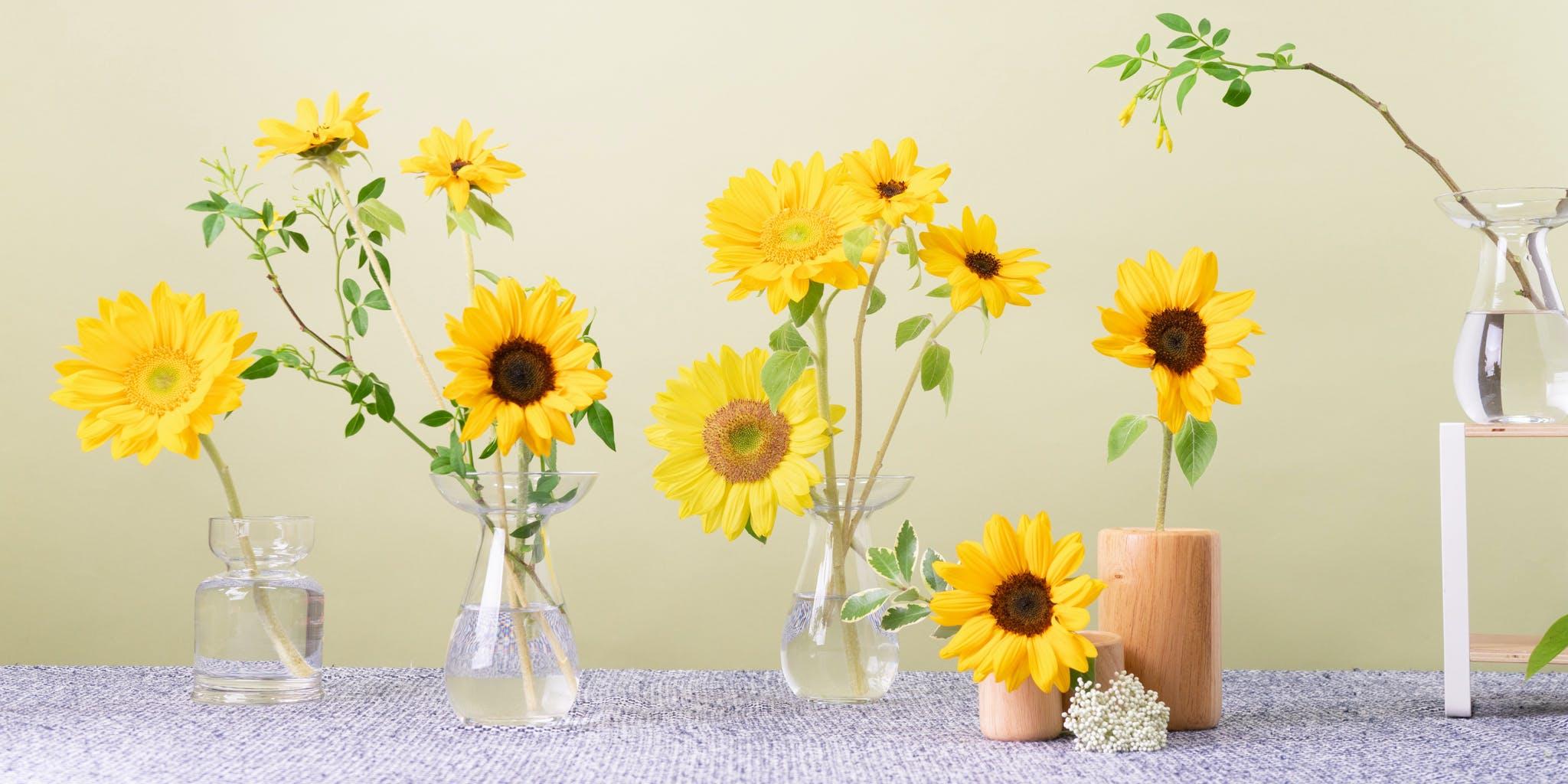 ひまわり - お花と植物のギフト通販 HitoHana(ひとはな)