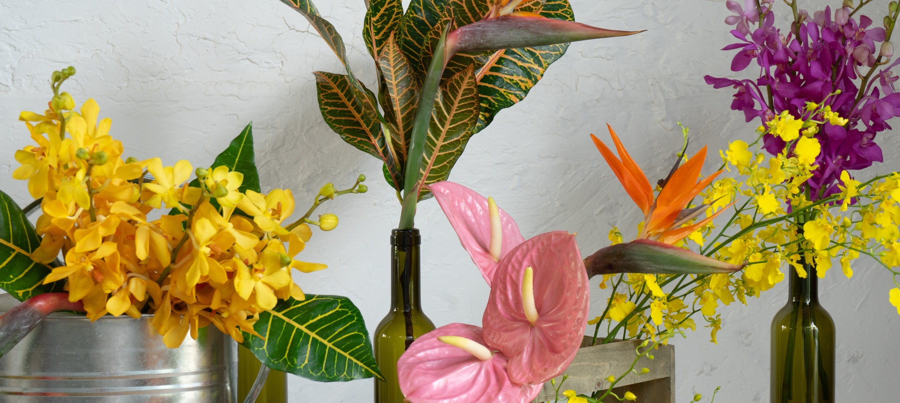 南国系 - お花と植物のギフト通販 HitoHana(ひとはな)