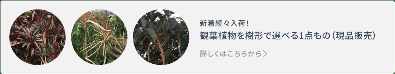 1点もの観葉植物