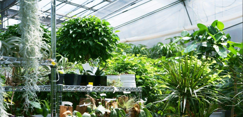 1点もの観葉植物 - お花と植物のギフト通販 HitoHana(ひとはな)