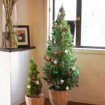 クリスマス 鉢植え