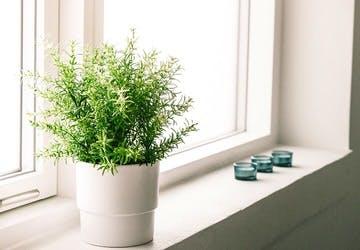 観葉植物 お風呂