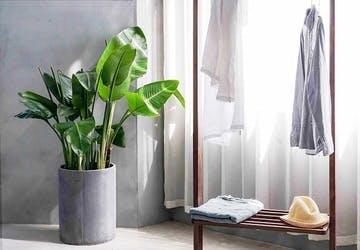 観葉植物 1k