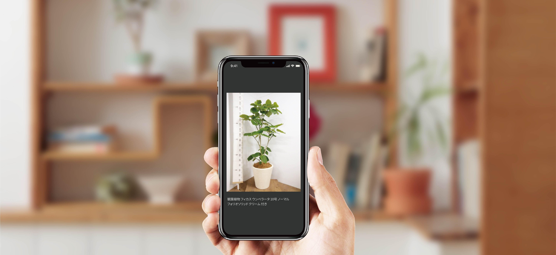 実物写真 - お花と植物のギフト通販 HitoHana(ひとはな)