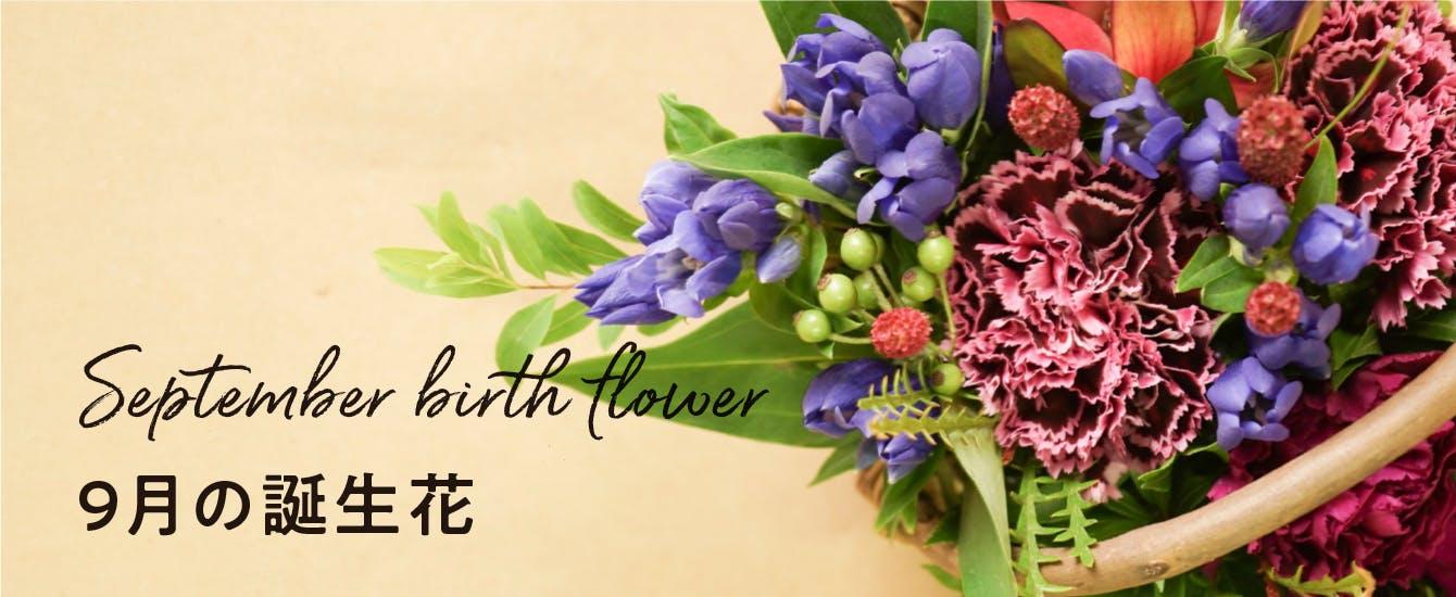 9月の誕生花 - お花と植物のギフト通販 HitoHana(ひとはな)