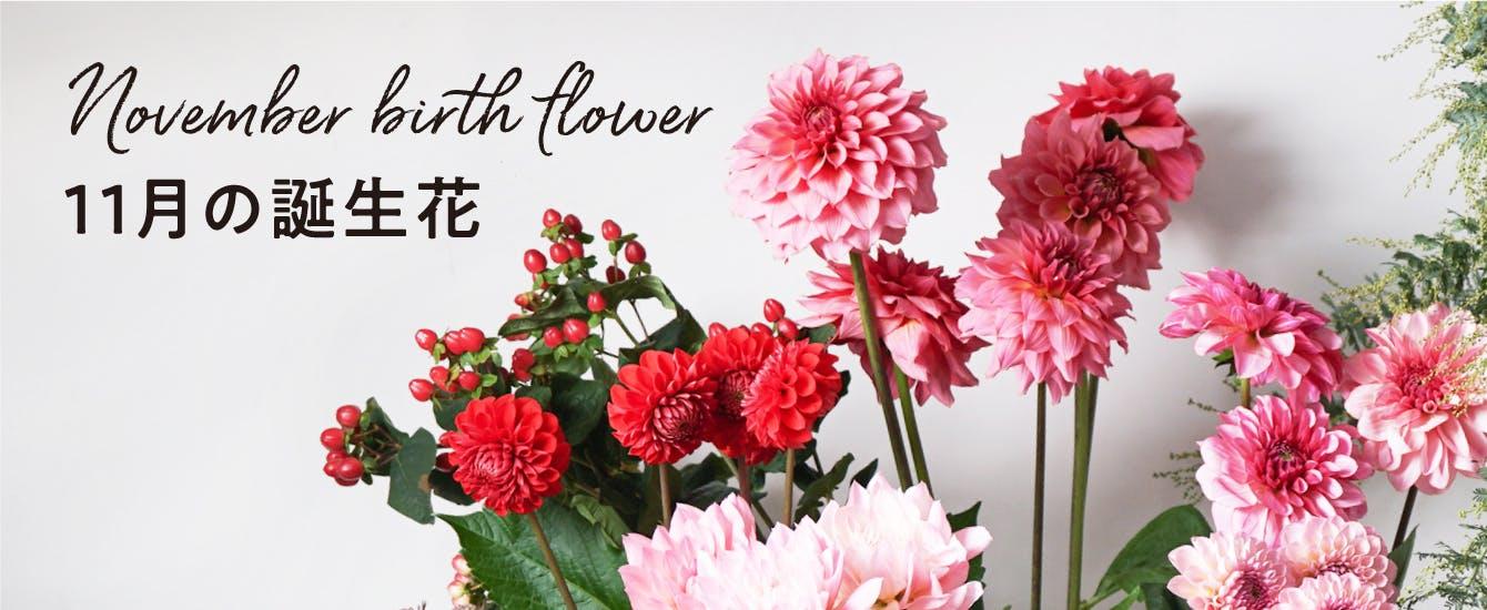 11月の誕生花 - お花と植物のギフト通販 HitoHana(ひとはな)
