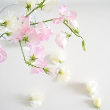スイートピー 花束