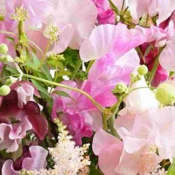 スイートピー 花束 ピンク