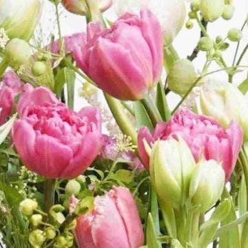 チューリップ 花束 ピンク