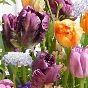 チューリップ 花束 パープル