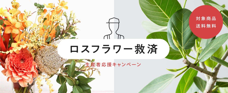 ロスフラワー救出 - お花と植物のギフト通販 HitoHana(ひとはな)
