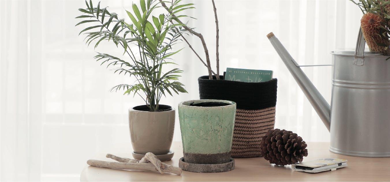 観葉植物 鉢カバー  - お花と植物のギフト通販 HitoHana(ひとはな)