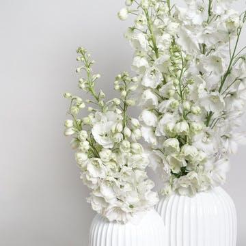 フラワーギフト 白(ホワイト)