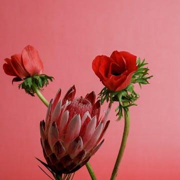 赤色(レッド)の花束