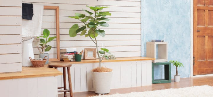 インテリア向きの観葉植物