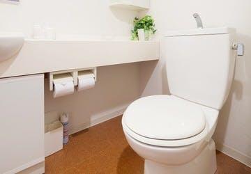 観葉植物 トイレ