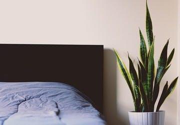 観葉植物 寝室
