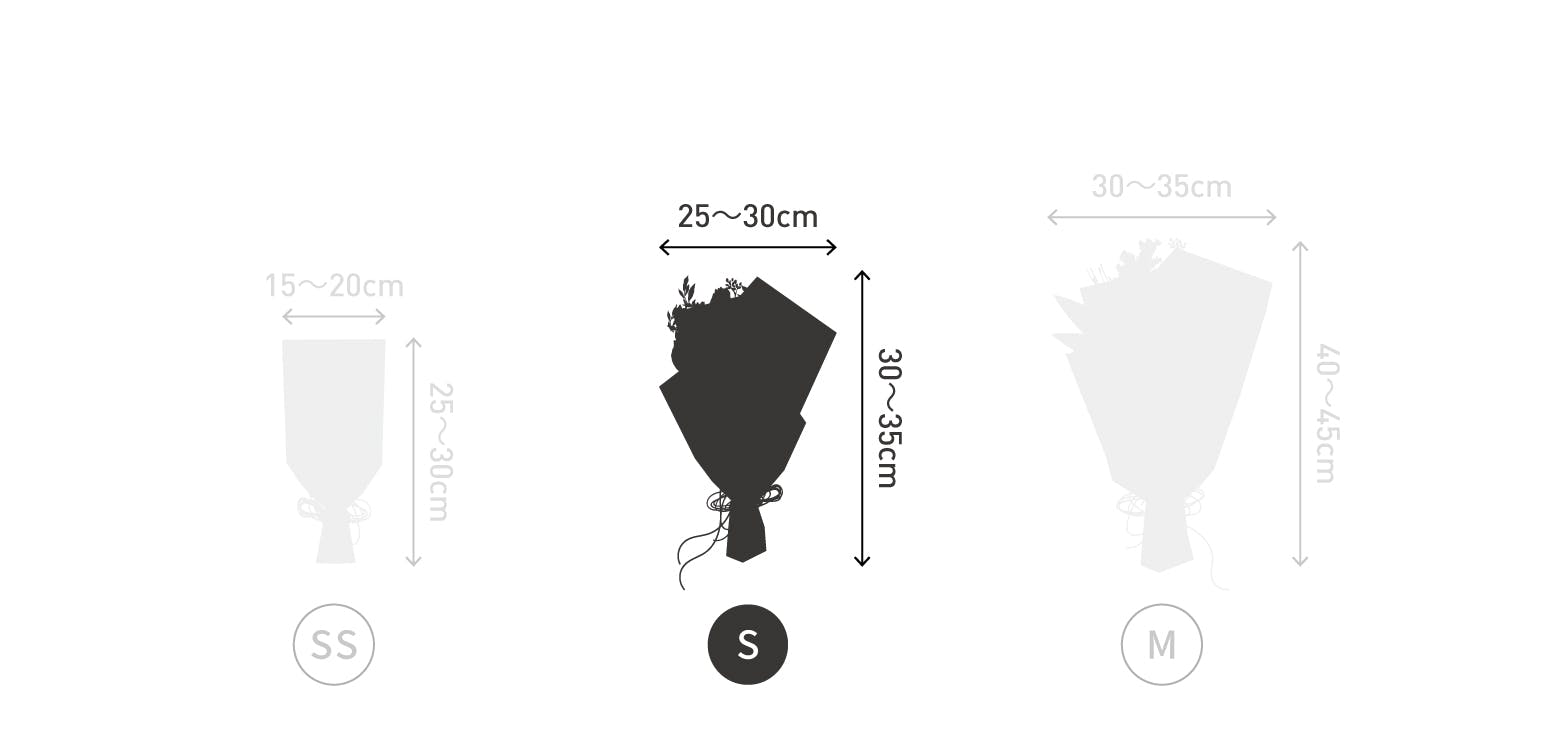 サイズ目安 高さ20〜25cm 幅15〜20cm 12本
