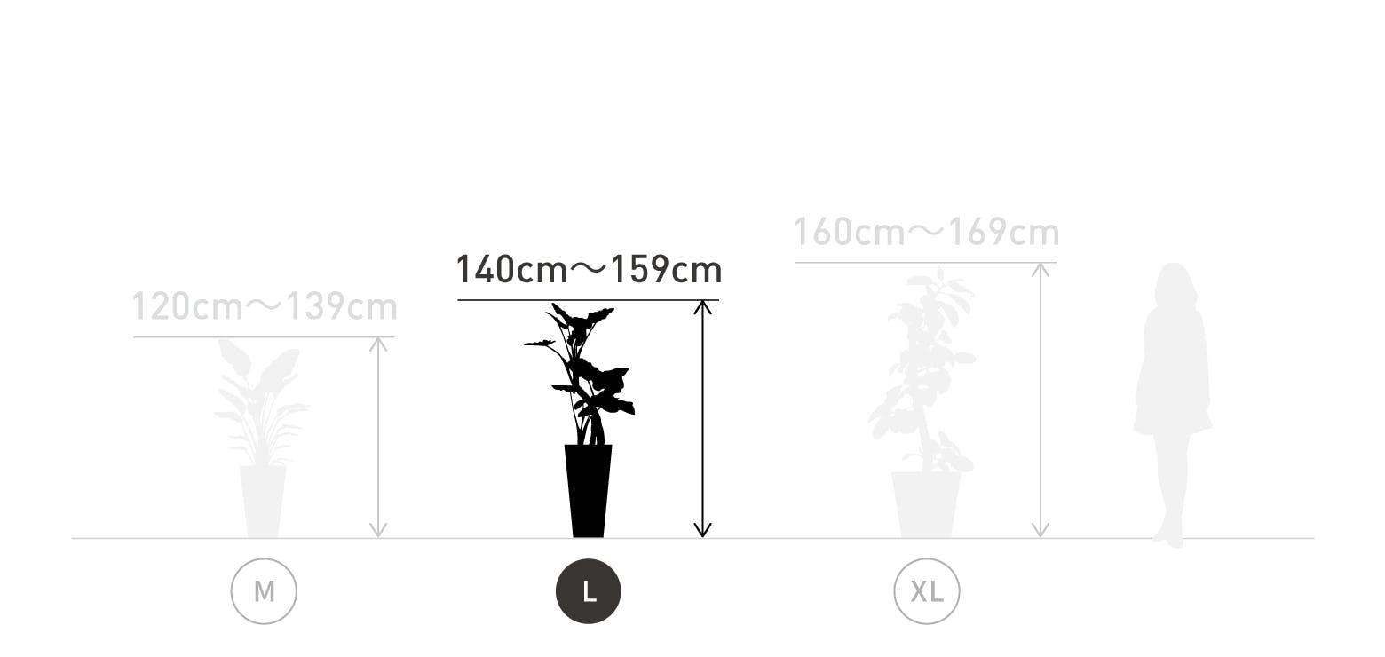 サイズ目安 L 140〜159cm